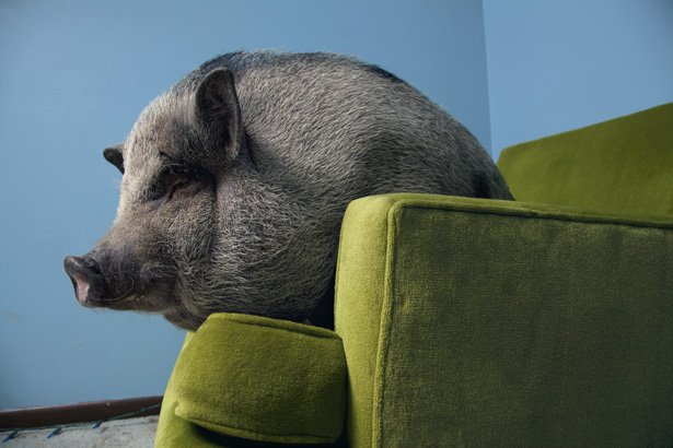 lounge pig strikes again