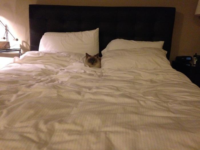big butt bed spot
