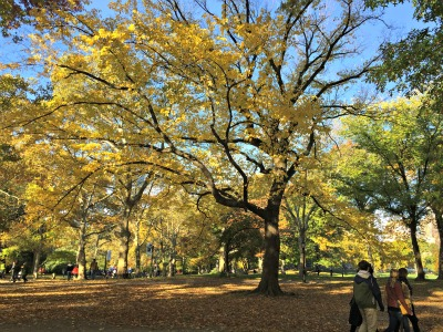 Central Park in the fall 1