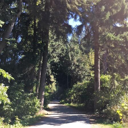 whistler-trail-1