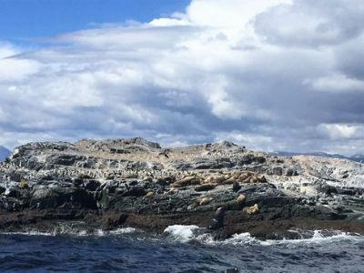 Bird Island and Sea Wolves Island tour 1_result