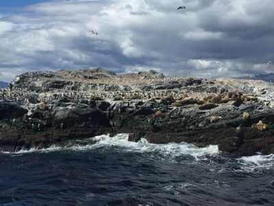Bird Island and Sea Wolves Island tour 2_result