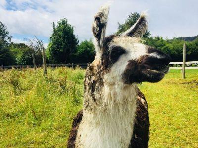 Llama Farm_result