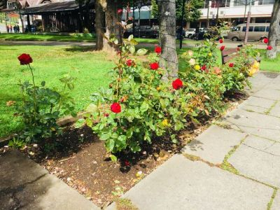 Puerto Varas city of roses_result