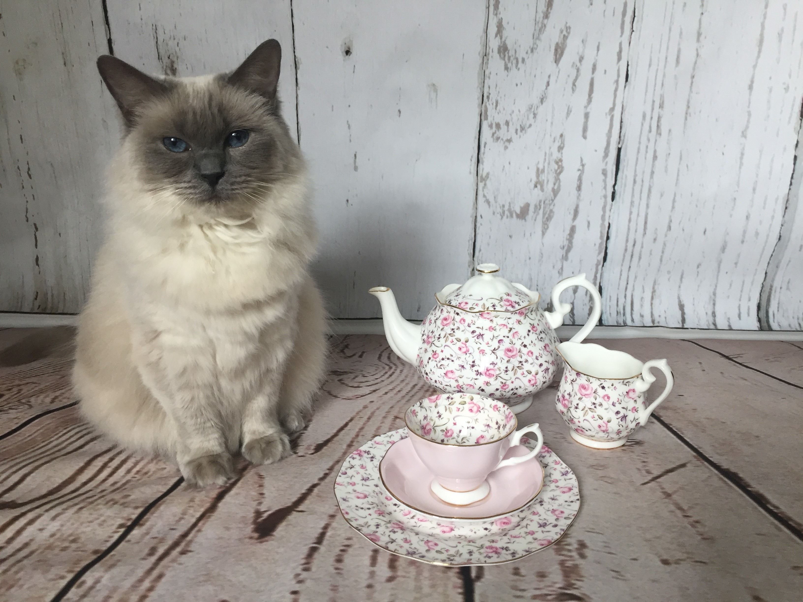 Glo Abroad - Ava tea party for one